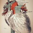Научная иллюстрация — комплексное направление в иллюстрации, представляющее сведения из широкого круга дисциплин во всем спектре научных, учебных и популярных изданий.